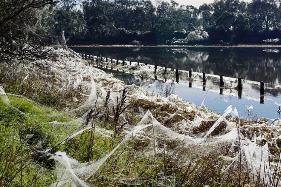 Cảnh tượng như game kinh dị lại tái diễn, hàng triệu con nhện cùng xuất hiện